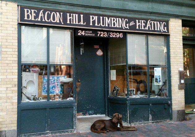 Dog on Beacon Hill in Boston