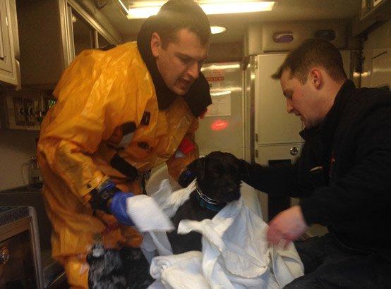 Firefighters warm up frozen dog in Arlington
