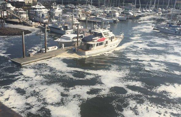 Foam in Boston Harbor at Charlestown