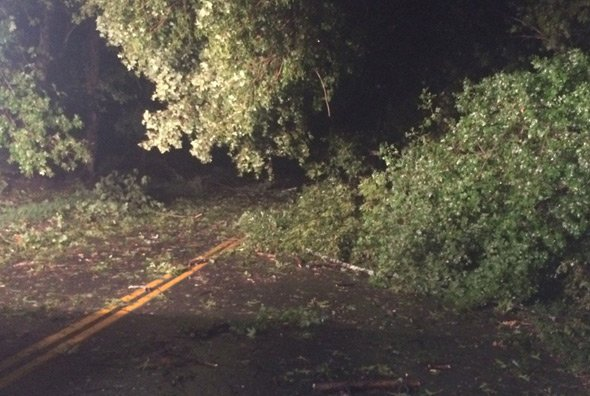 Tree down in Concord