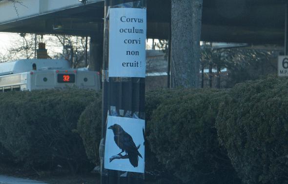 Corvus oculum corvi non eruit