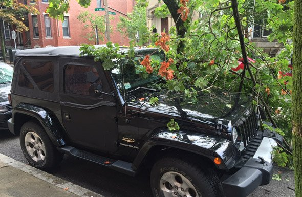 Tree comes down on South Boston Jeep