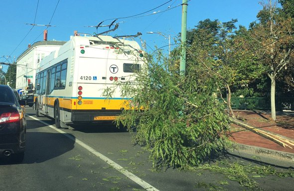 Tree interfering with a 71 bus