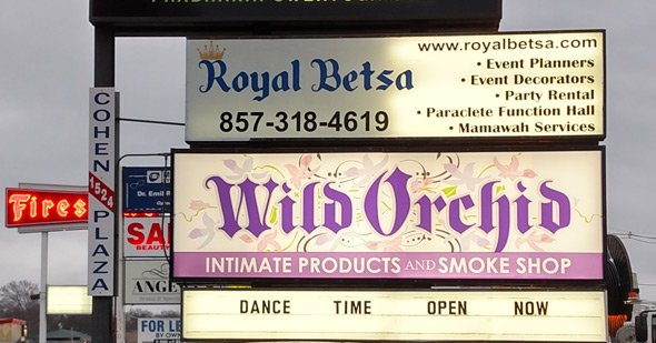 Wild Orchid in West Roxbury