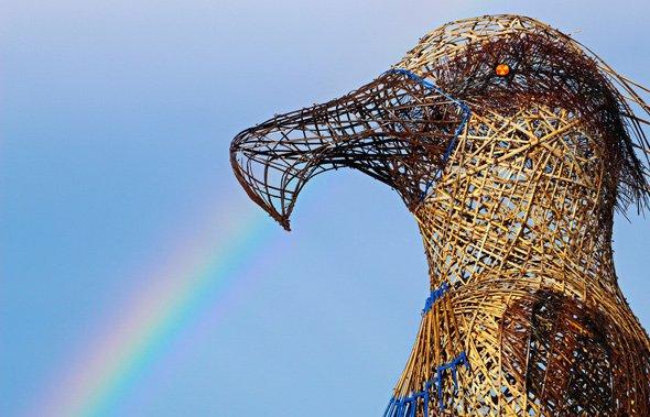 Rainbow at the bird beak