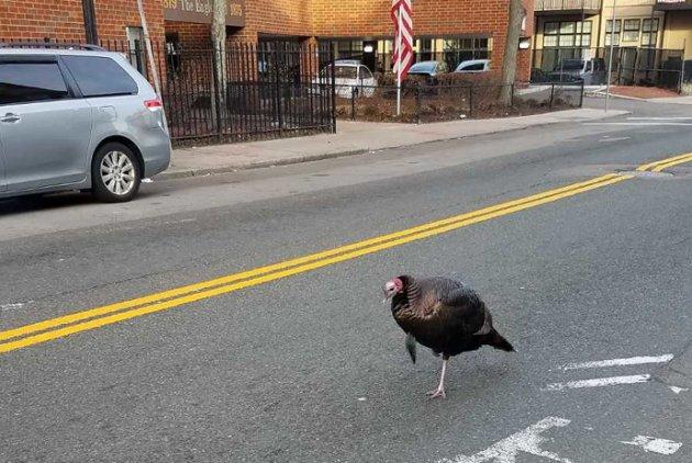 Cold turkey in Ashmont