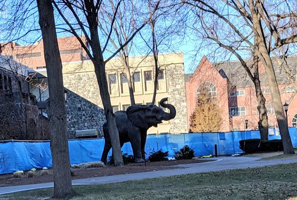 Loose elephant on Tufts University campus