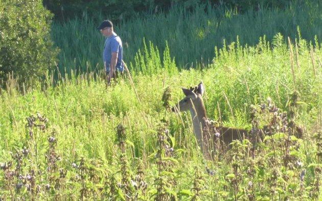Deer at Millennium Park
