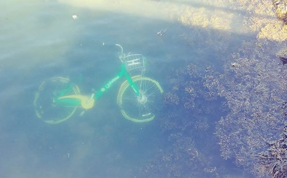 Rental bike in the water off East Boston
