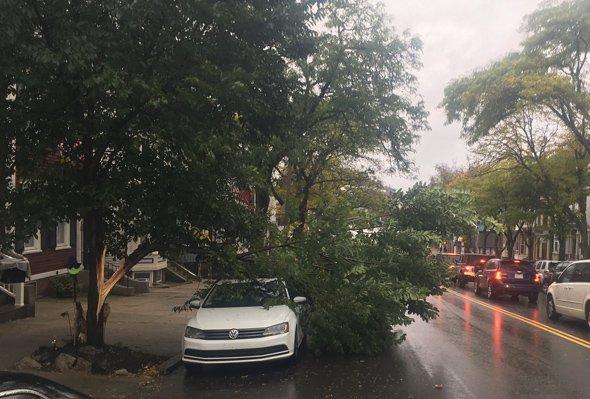 Split tree on Broadway in South Boston