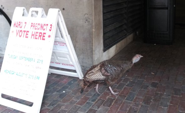 Turkey at a polling place