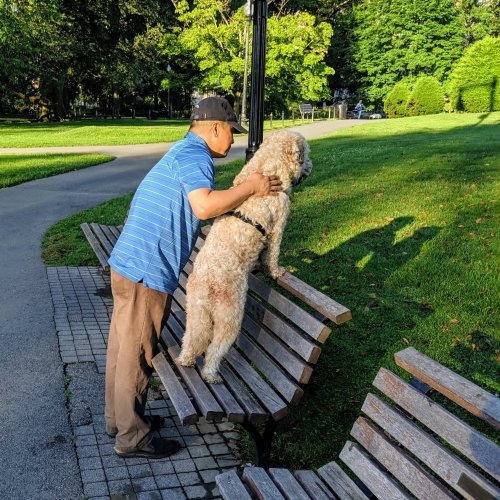 Dog in the Public Garden