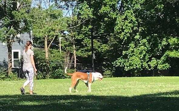 Big dog in Johnson Park