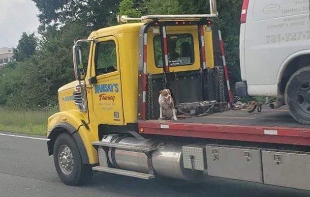 Dog sitting on back of platform truck