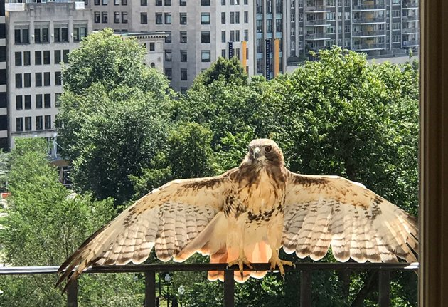 Mike Duhawkis, the State House hawk