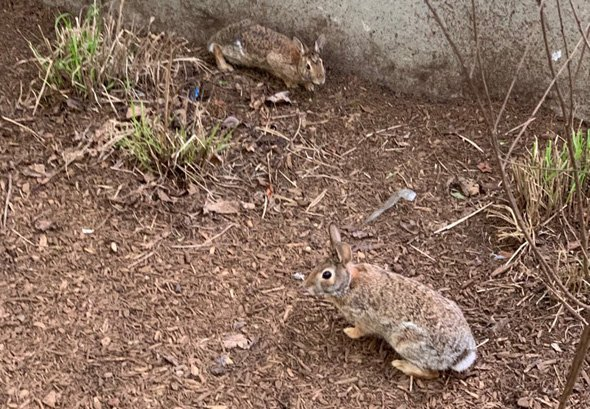 Rabbits on the Rose Kennedy Greenway