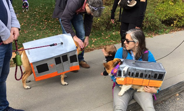 Dogs in Orange Line outfits
