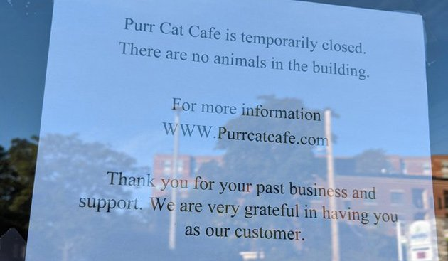 Purr Cat Cafe in Brighton temporarily closed, sign says