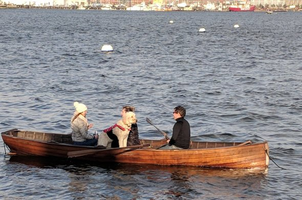 People and dog rowing in Boston Harbor