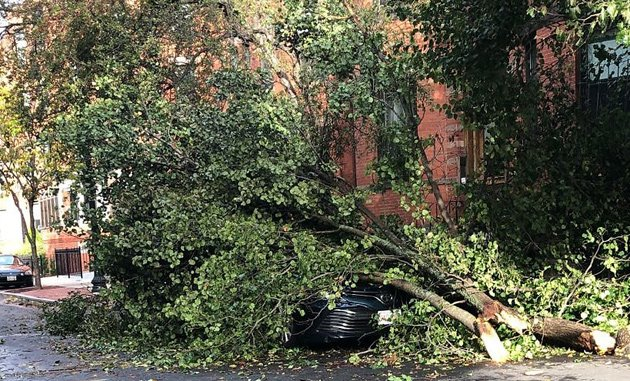 Tree on car on Symphony Road