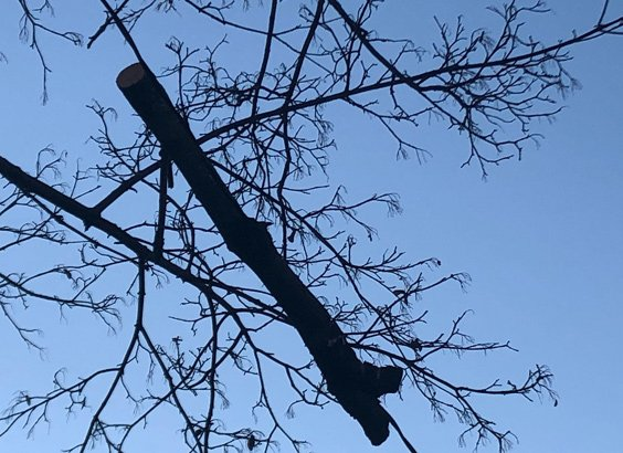 Tree limb just hanging in air