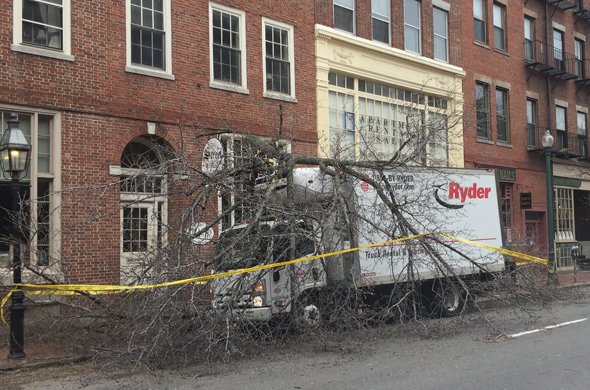 Tree destroyed by truck on Charles Street on Beacon Hill