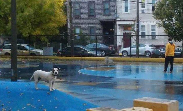 Dogs on playground