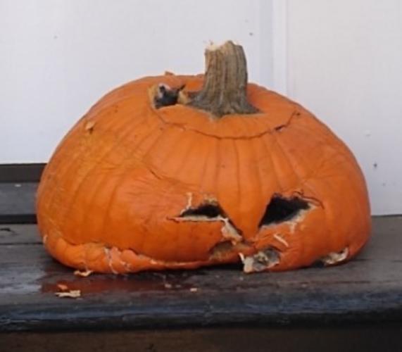 beat pumpkin