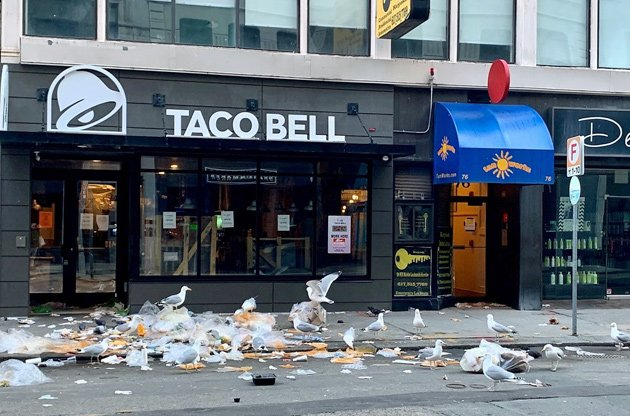 Gulls enjoying a feast outside the Taco Bell in downtown Boston