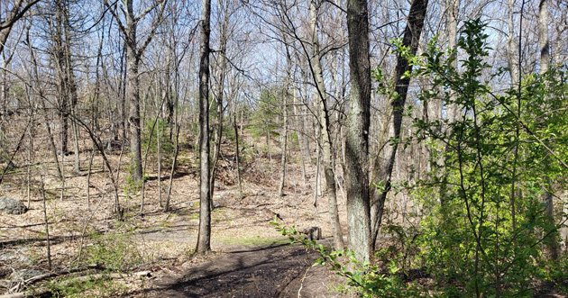 Allandale Woods in early May