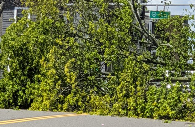 Downed tree on East Broadway