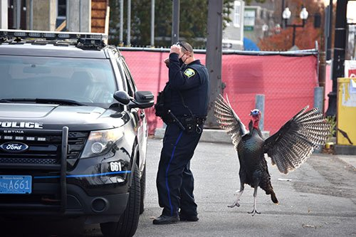 Angry turkey and cop in Somerville