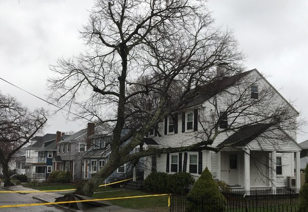 Tree on a house in West Roxbury