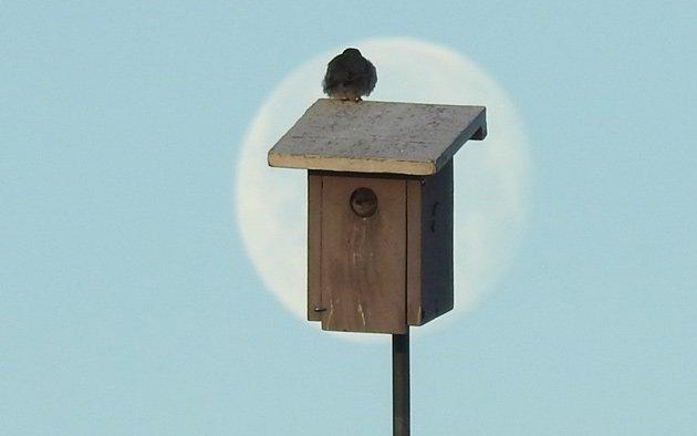 Sparrow on a box at Millennium Park