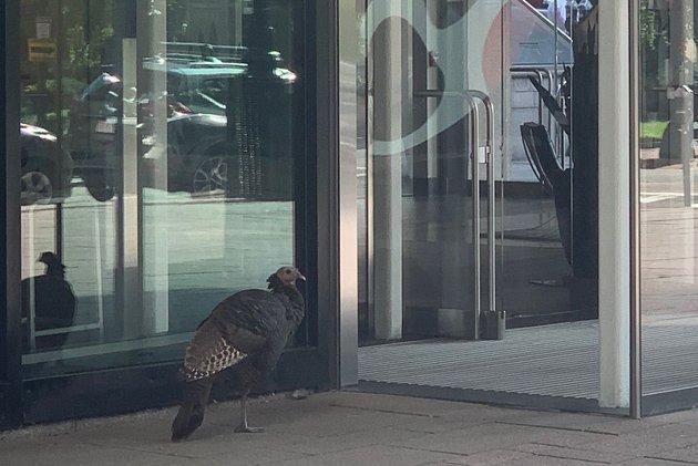 Turkey outside Equinox health club