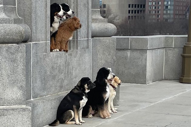Dogs posing for a photo on the Longfellow Bridge