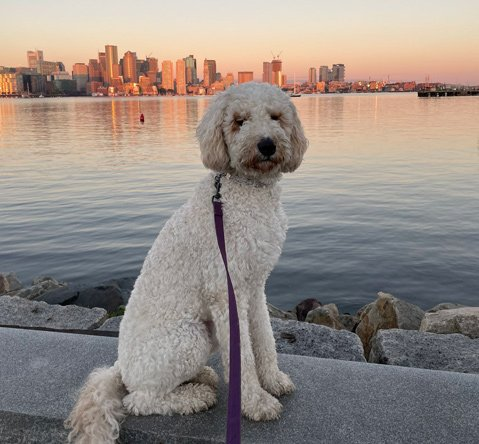 Max and the Boston skyline in early morning light on East Boston waterfront