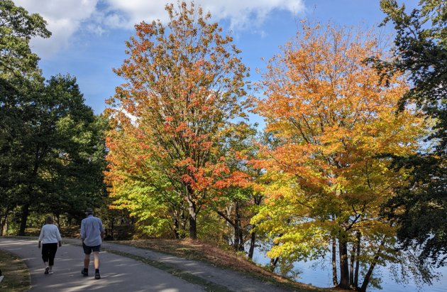 Colorful trees at Jamaica Pond