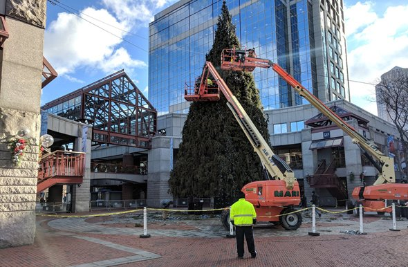 Big Christmas tree being taken down at Faneuil Hall Marketplace