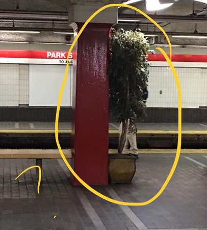 Potted plant in Park Street station on the Red Line