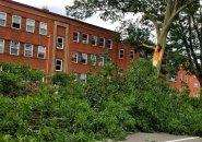 Broken tree on the Arborway