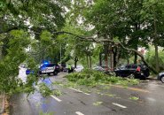 Tree down on Mt. Auburn Street in Cambridge