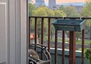 Raccoon on Fenway balcony