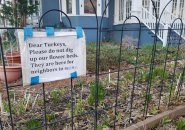 A note pleading with turkeys not to eat a Cambridge garden