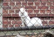 White squirrel on Hawkins Street