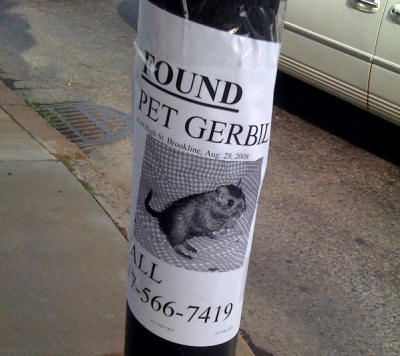 Found gerbil!