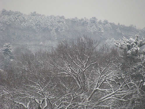 Brighton in the snow