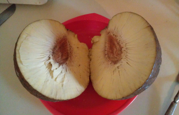 Sliced open breadfruit