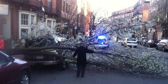 Tree down on Charles Street