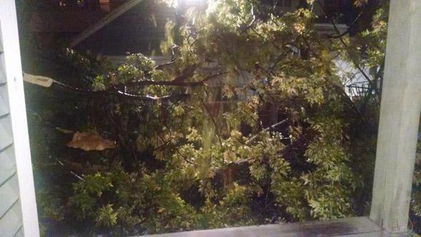 Everett tree down
